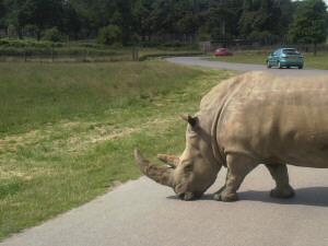 Over the years Zoos and Safari parks have always been a popular destination. You can expect however the ODD traffic jam.